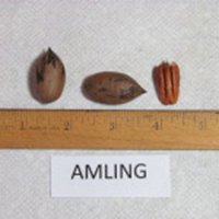 Amling