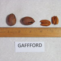 Gafford
