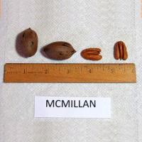 McMillan Pecan