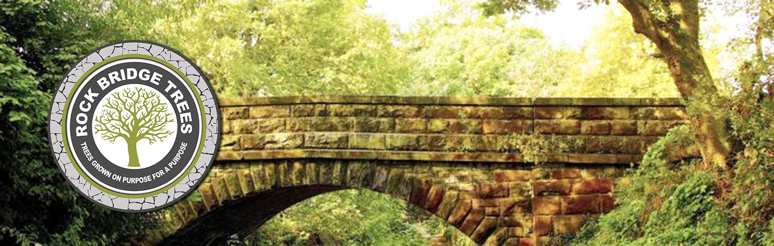 Welcome to Rock Bridge Trees