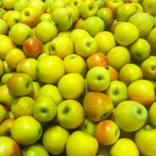 Gold Rush Apples