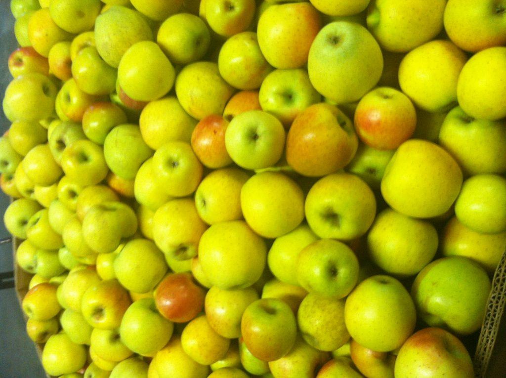 Gold Rush Apple