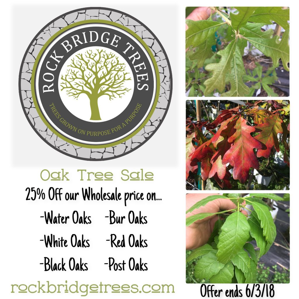 Oak Tree Sale