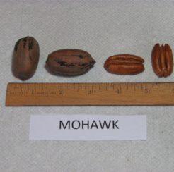 Mohawk Pecan