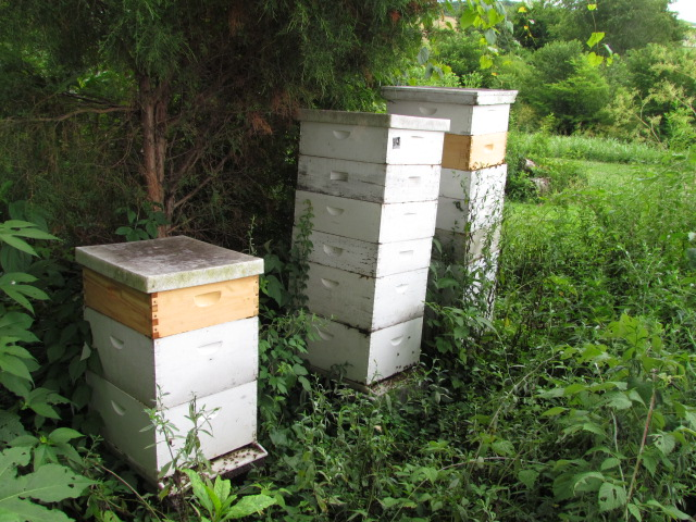 Good Old Days of Beekeeping