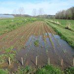 Home testing soil drainage