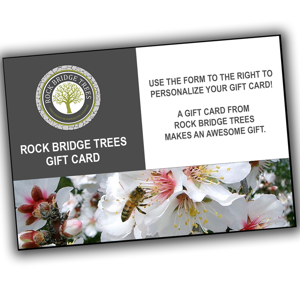 Bee tree gift cards rock bridges trees bee tree gift cards negle