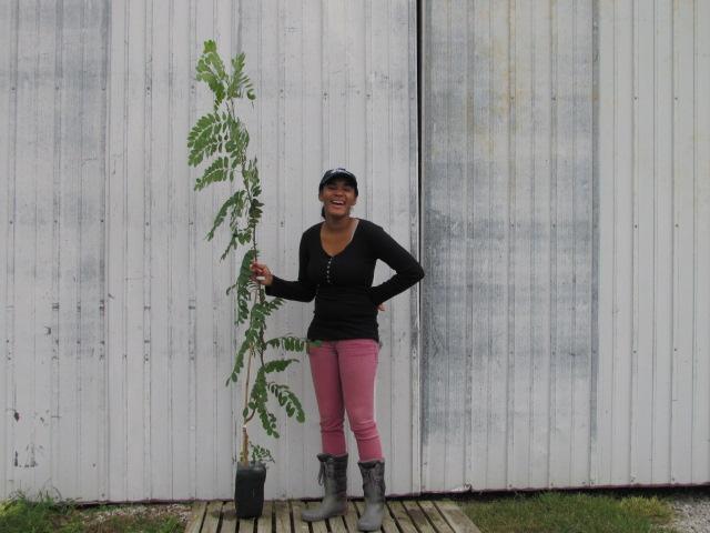 Robinia pseudoacaccia