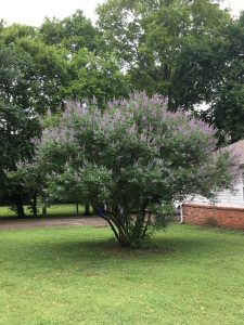 What is killing my Bee Trees