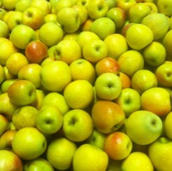 Gold Rush Apple