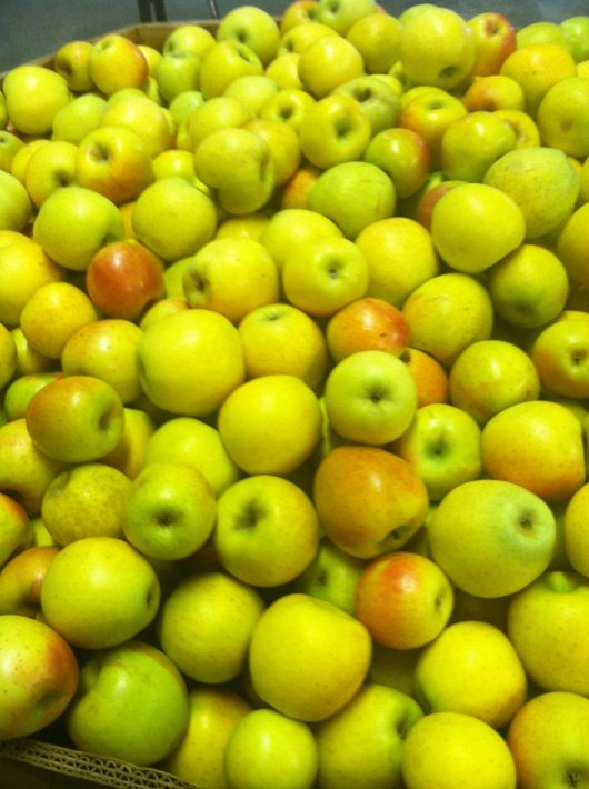 Gold Rush Apples