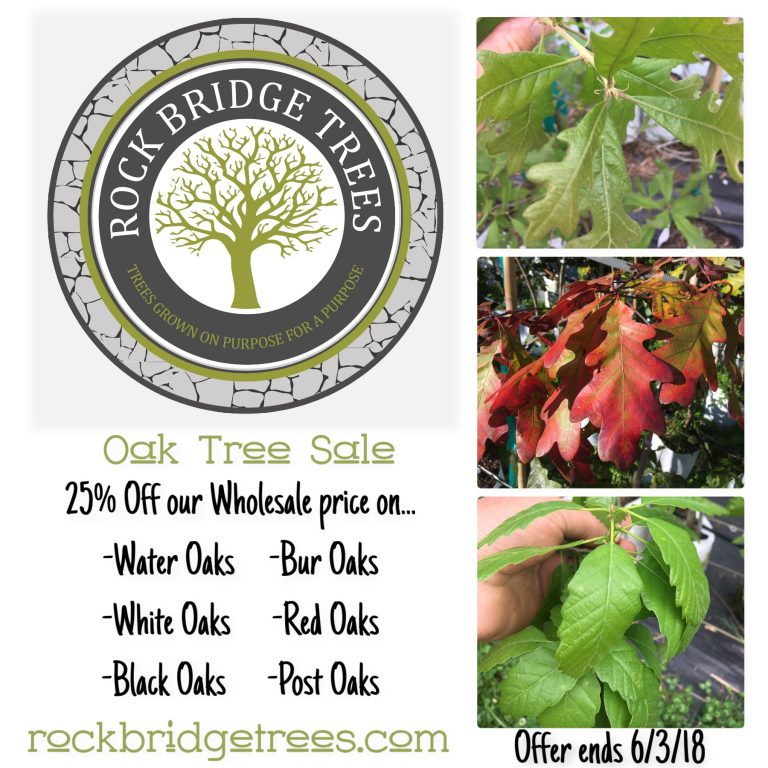 Oak Tree Sale