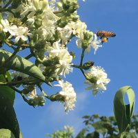 A Landscape for Pollinators