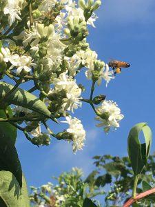 Landscape for Pollinators