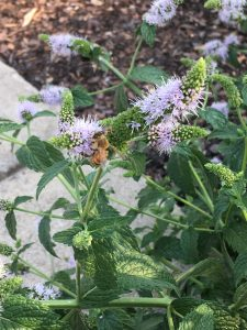 A Landscape for Pollinators