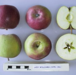 Lady Williams Apple