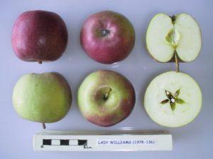 Lady Williams Apple