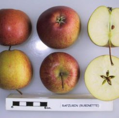 Rubinette Apple