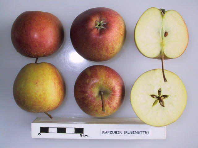 Rubinette Apple