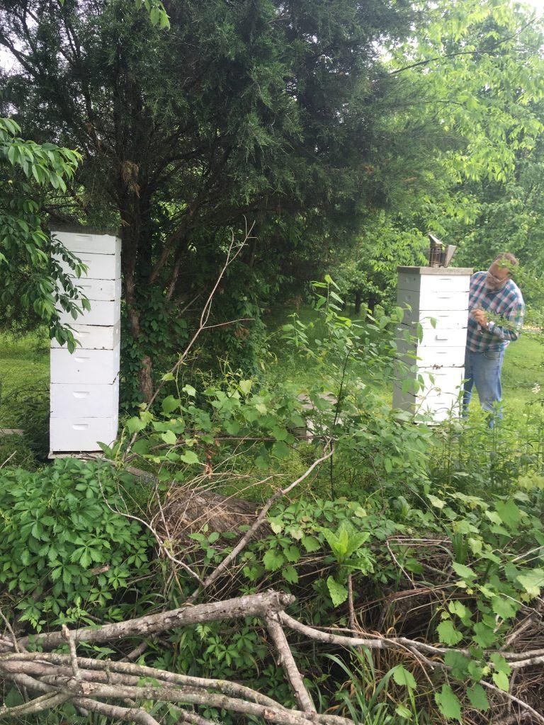 super hive mystery